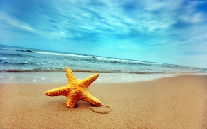 estrella-de-mar-en-la-playa-1365